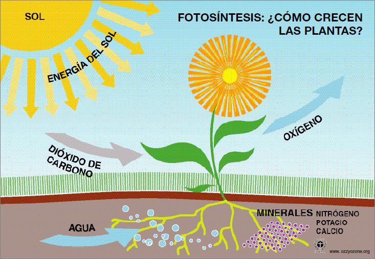 La fotosíntesis 2